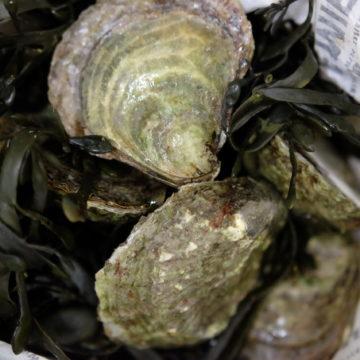 oester klein platte
